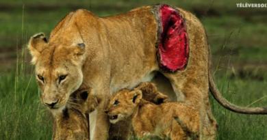La photographie animalière pour passion